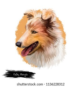 Collie rough Scottish dog breed originated in United Kingdom. Mammal lassie domestic animal with long brown fur long-coated pet isolated on white background digital art illustration