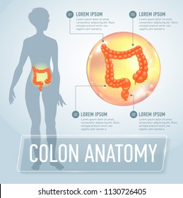 colon infographics banner illustration