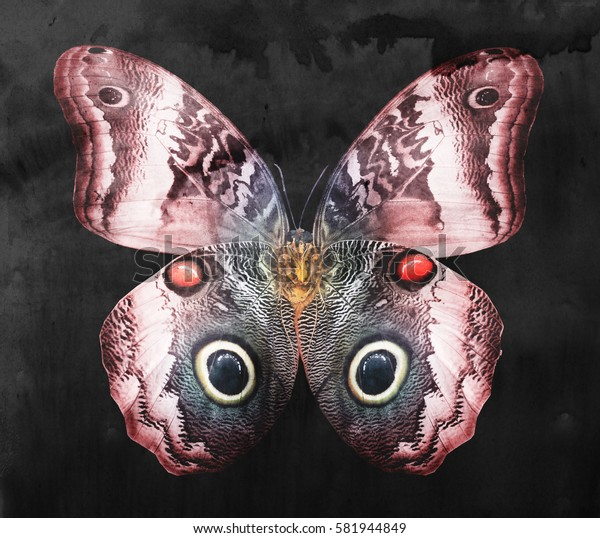 Color butterfly, isolated on black. Watercolor