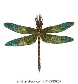 Color dragonfly hand drawn. Isolated insect on white background.