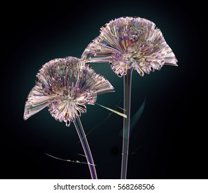 color glass flower isolated on black, the coxcomb 3d illustration