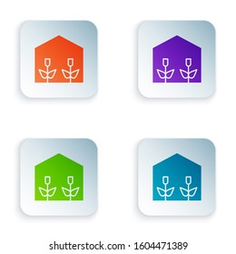 Color Home greenhouse and plants icon isolated on white background. Set icons in square buttons.