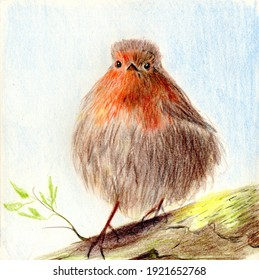 Color pencil illustration of a robin bird standing on the branch with few green leaves