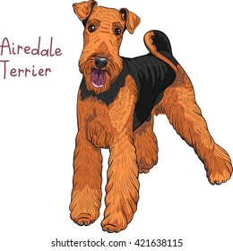 color sketch of dog Airedale Terrier breed