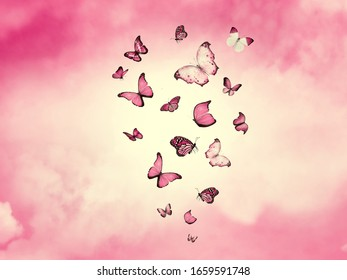 Free Butterfly Wallpaper Backgrounds Images Stock Photos