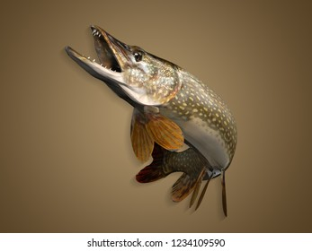 Colored background and perfect pose for common pike fish up in air clean 3d render