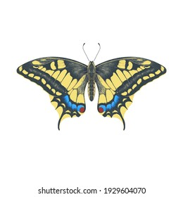 Colored pencil imitation drawing realistic illustration of swallowtail butterfly isolated on white background