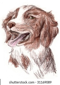 Colored Pencil Sketch of a Britney Spaniel Dog