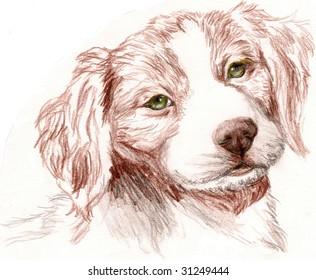 Colored Pencil Sketch of a Britney Spaniel Puppy.