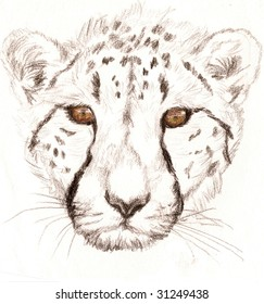 Colored Pencil Sketch of a Cheetah. Done by Ashlee Pearson