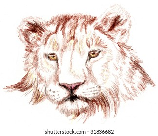 Colored Pencil Sketch of a lion
