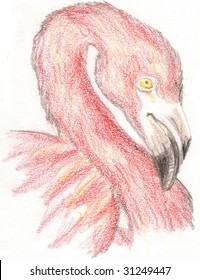 Colored Pencil Sketch of a pink flamingo head, over a white background.