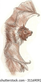 Colored Pencil Sketch of a small brown bat