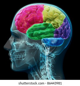 Colored sections of a male human brain ,x ray concept. Part of a medical series