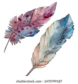 Colorful bird feather from wing isolated. Watercolor background illustration set.