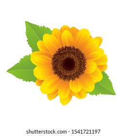 colorful digital flower design image