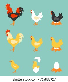 A colorful farm birds collection.  Illustration of Rooster, Hen, Chick and Eggs.