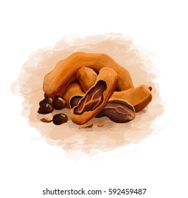 colorful fetus tamarind on a pure white background
