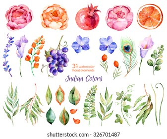 Colorful floral collection with roses,flowers,leaves,pomegranate,grape,callas,orange,peacock feather,Colorful floral collection with 31 watercolor elements.Set of floral elements for your compositions