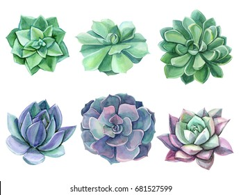 Colorful floral set Watercolor succulents