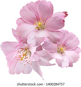Colorful flower on white background,Beautiful flowers for your design and greeting cards for the holiday
