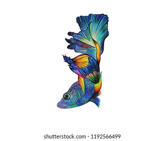 Colorful hand drawing color pencil  fish on white background