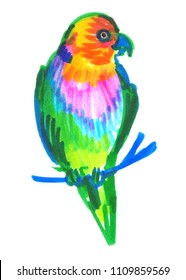 Colorful parrot painted in highlighter felt tip pen on clean white background