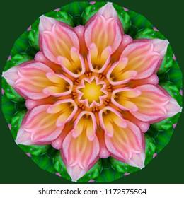 Colorful, pink, green, lavender, yellow, orange mandala with floral design. Decorative element, ethnic design, web design, anti-stress therapy, meditation