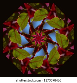 Colorful, red, green, blue mandala with geometric floral pattern on dark background. Decorative element, ethnic design, web design, anti-stress therapy, meditation.