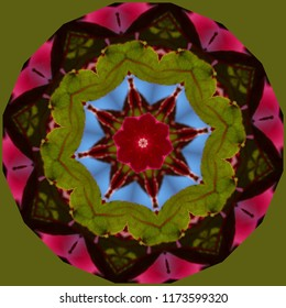 Colorful, red, green, blue mandala with geometric floral pattern on green background. Decorative element, ethnic design, web design, anti-stress therapy, meditation.