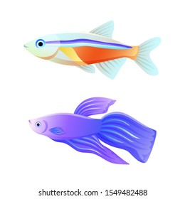 Colorful sea inhabitant rare neon tetra and common betta fish as aquarium animal flat raster illustration for nautical site or fishery journal poster.