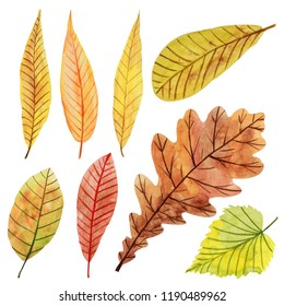 Colorful set with watercolor autumn leaves on white background.