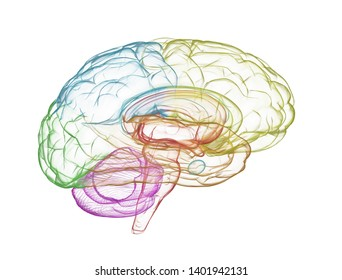 Colorful side view brain illustration isolated on white background. 3d illustration