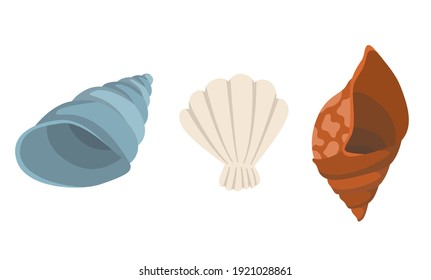Colorful tropical sea shells underwater icon collection. Marine set cute stickers on the white background. illustration. Perfect for invitations, greeting cards posters banners and flyer