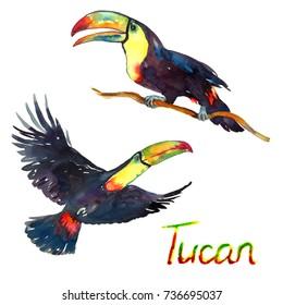 Farbige Tukane, die auf Zweig fliegen und sitzen, Vogelsammlung, einzelne handbemalte Aquarell-Illustration mit handgeschriebener Inschrift