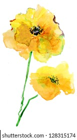 Colorful Yellow Poppy, watercolor illustration
