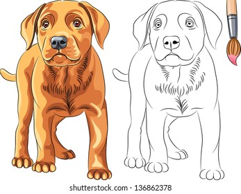 Coloring Book for Children of funny serious Puppy dog Labrador Retriever breed