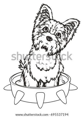 Coloring Yorkshire Terrier Sit Inside Large Stock Illustration