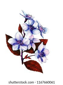 Coloristic variation in the blue color of the fragment of watercolor botanical illustration of cherry blossoms.
