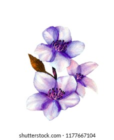 Coloristic variation in the violet cetacean solution of the fragment of the botanical illustration of a blossoming cherry branch.