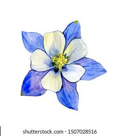 Columbine Flowers Images Stock Photos Vectors Shutterstock