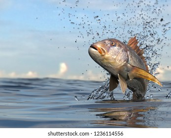 Common dentex fish jumping in ocean 3d render