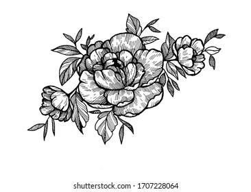 common peony with leaves tattoo hand drawn sketch  on paper, black and white design