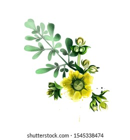 Common rue ruta graveolens flowering plant isolated on white. Herb-of-grace, species of Ruta grown as an ornamental plant and as an herb. Ruta flower. Herbs and spices collection. Digital art