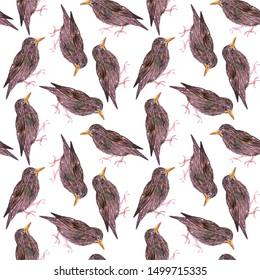 Common starling or European starling or Sturnus vulgaris bird seamless watercolor birds painting background