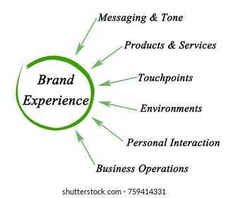 Components of Brand Experience