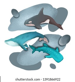 Composition with dolphin, whale and whale shark on white background with abstract spots