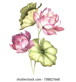 Lotus Flower Watercolor Images Stock Photos Vectors Shutterstock