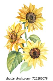 composition of sunflowers, watercolor botanical illustration