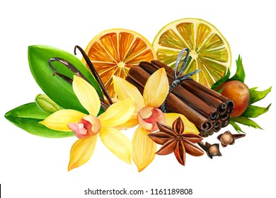 composition of vanilla flower, anise, dry orange slice, nut, carnation and cinnamon sticks on isolated white background, watercolor illustration, hand drawing